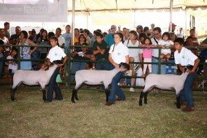 show topic state farm fair kualoa ranch oahu hawaii
